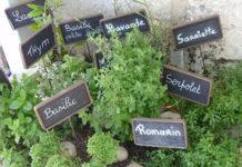herbes de provence composition